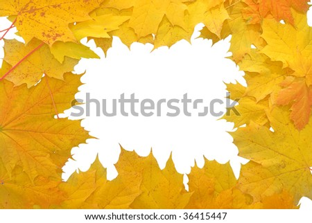 frame made of yellow autumn leaves