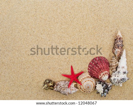 Frame made with seashells with copyspace - stock photo