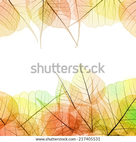 Frame of Autumn color transparent Leaves - isolated on white background, copy space - stock photo