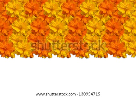frame of beautiful flowers, over white background