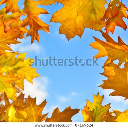 Frame of colorful autumn leaves against blue sky