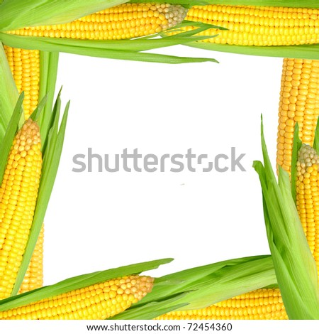 frame of corn - stock photo