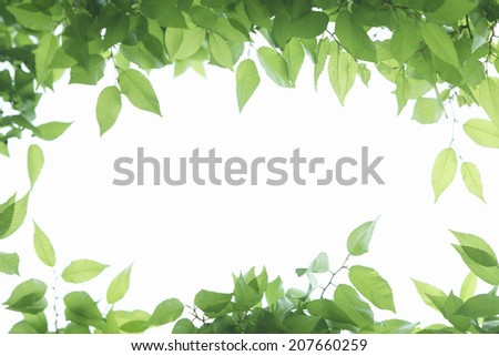 Frame Of Fresh Green And Sunshine Coming Through Foliage - stock photo