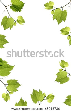 frame of grape leaves isolated on white
