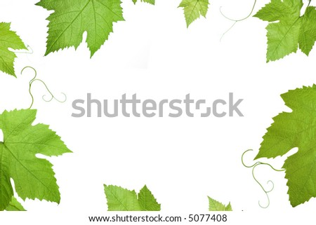 frame of grape or vine leaves isolated on white background with copy-space in the center .Please take a look at my other images of grape-leaves