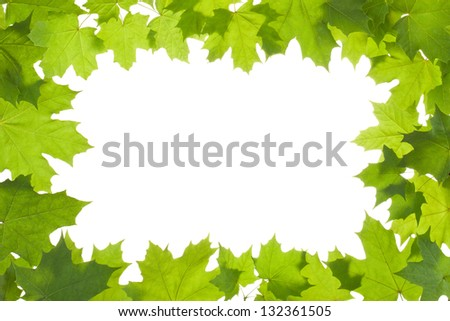 Frame of maple leaves in back light. Isolated on a white. - stock photo