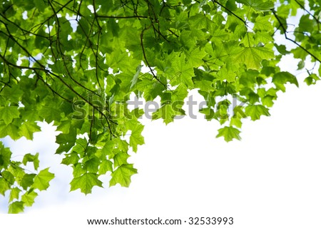frame of maple leaves isolated - stock photo