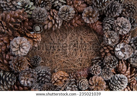 Frame of needles and pine-cones