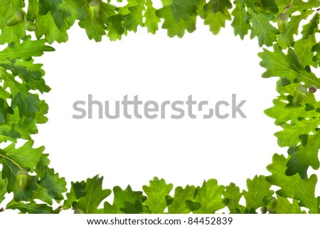 Frame of oak leaves in backlight. Isolated on white. - stock photo