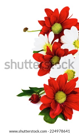 Frame of Red and White Daisy Chrysanthemum (Chrysantheme) with Leafs and Buds isolated on white background - stock photo