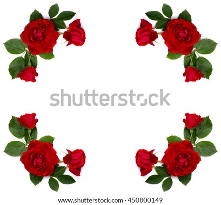 Frame of red roses (shrub rose) on a white background with space for text - stock photo