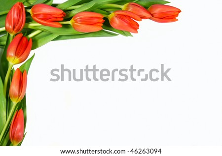 Frame of red tulips on the left side on white background