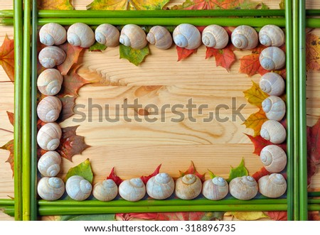 Frame of snail shells, cane and leaves on wood - stock photo