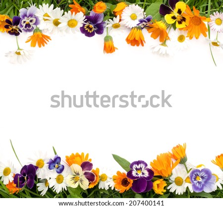 Frame of the colors of daisies, calendula and pansies on white background