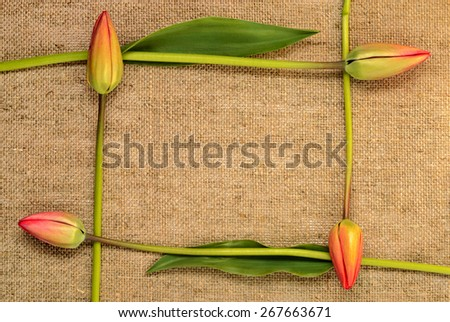 frame of tulips on burlap background