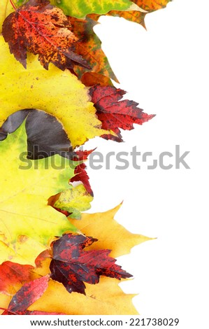 Frame of Variegated Autumn Leafs isolated on White background