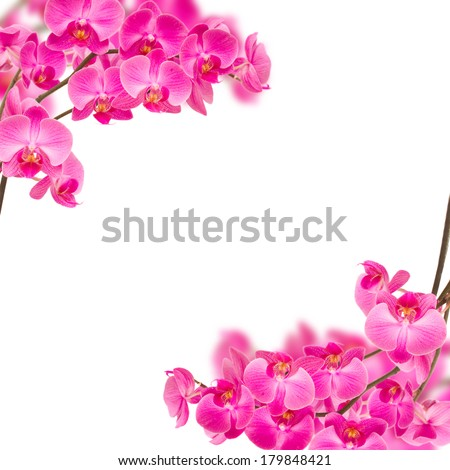 frame of violet orchids on branch isolated on white background