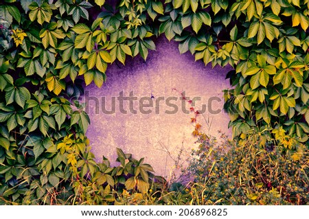 frame of wild green grapes - stock photo