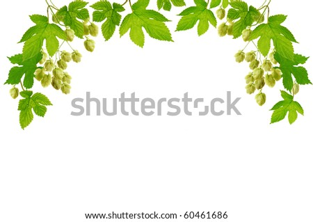 Frame with fresh hop branches, isolated on white background - stock photo