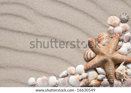 Frame with many different seashells. - stock photo