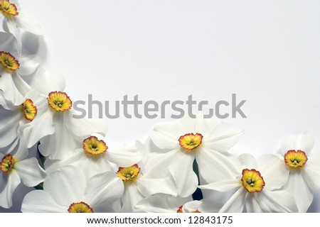 Frame with narcis flowers on white background - stock photo