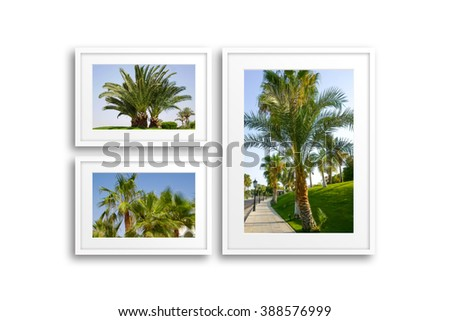 Frames collage with pictures of palms. Soft blur style posters