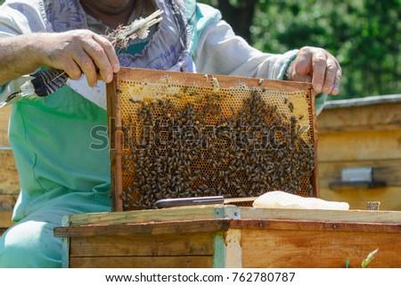 Frames Bee Hive Beekeeper Harvesting Honey Beekeeper Stock Photo ...