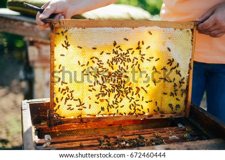 Frames Bee Hive Beekeeper Harvesting Honey Stock Photo (Edit Now ...