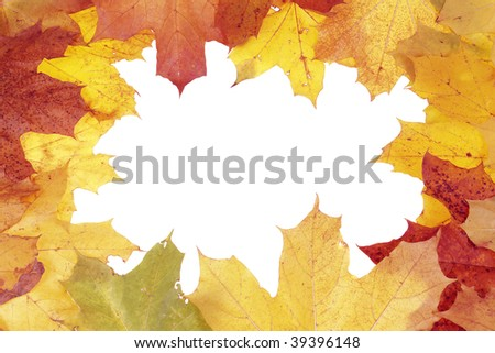Framework for photos from multi-coloured maple leaves