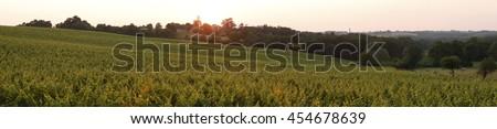 France, Bordeaux Vineyard - stock photo