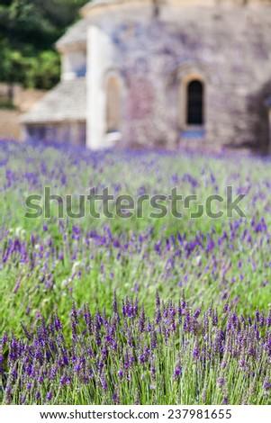 France, Provence Region.Lavander field in summer season. - stock photo