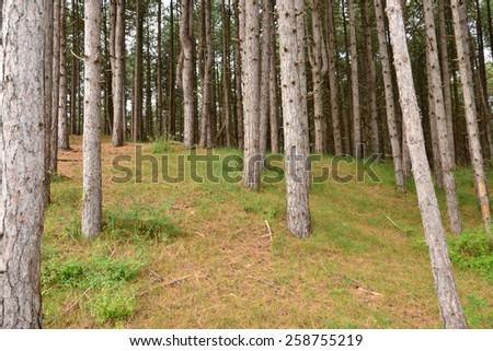 France, the picturesque forest of Fort Mahon Plage  - stock photo