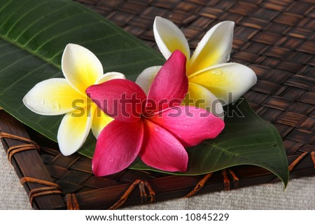 frangiapani / plumeria flowers on leaf on bamboo woven mat