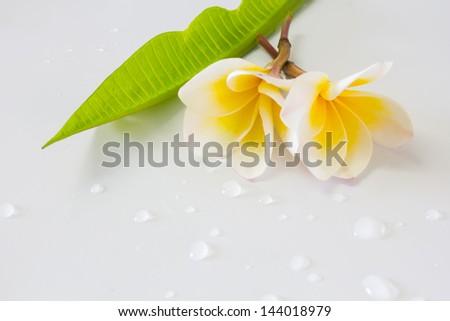 Frangipani and leaf on white background - stock photo
