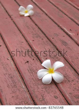 frangipani falling on the wooden floor - stock photo