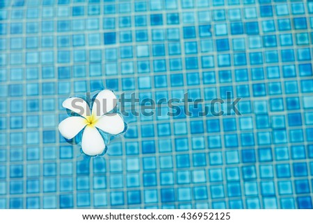 Frangipani flower floating in the swimming pool - stock photo
