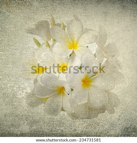 frangipani flower in the grunge paper