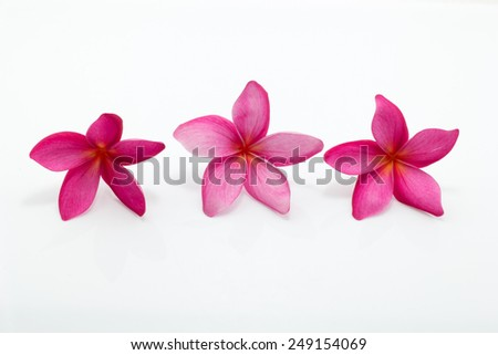 frangipani flower isolated on white blackground - stock photo
