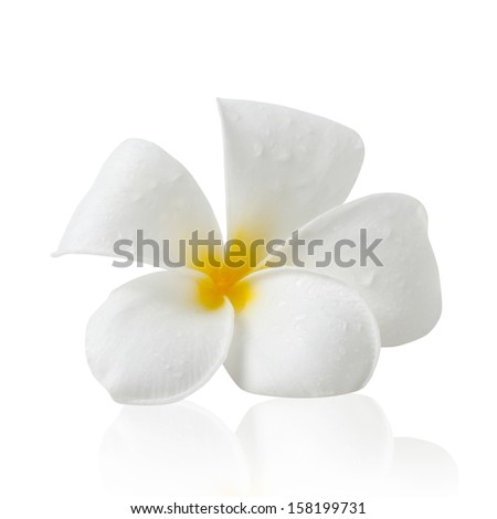 Frangipani flower isolated on white, with Clipping Path - stock photo
