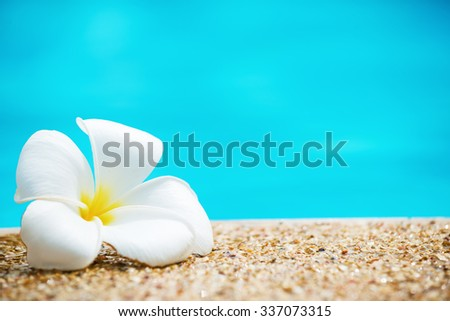 Frangipani flower, Leelawadee next to the turquoise water of the swimming pool.Copy space - stock photo