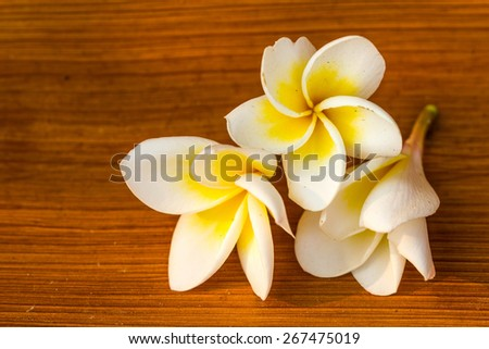 frangipani flower on brown background - stock photo