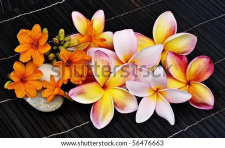 frangipani flower on dark background - stock photo