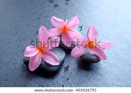 Frangipani flower on stone, zen concept.