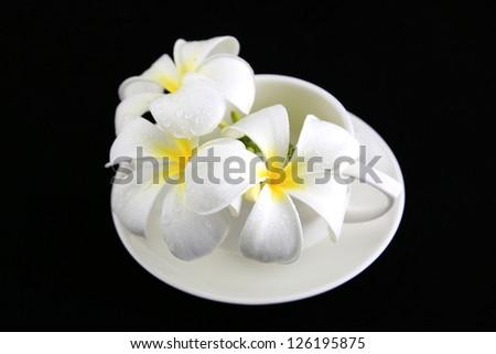 Frangipani flower on white cup - stock photo