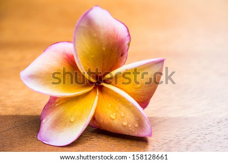 Frangipani flower on wood backgrounds
