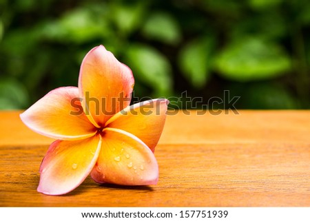 frangipani flower on wood table