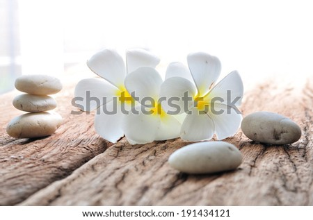 frangipani flower with zen stone, concept of spa, treatment, relaxation and nature - stock photo