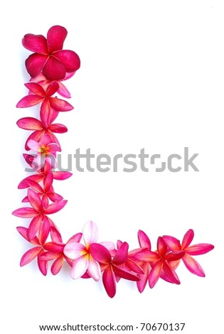 Frangipani flowers for border - stock photo