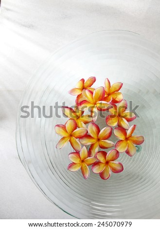 frangipani flowers in the glass bowl - stock photo