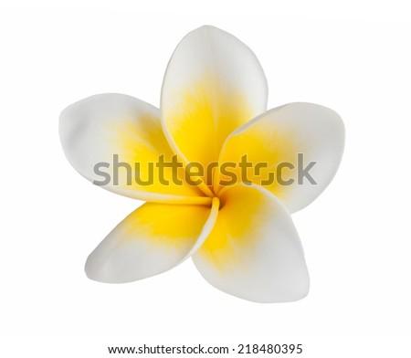 Frangipani flowers  isolated on white background - stock photo